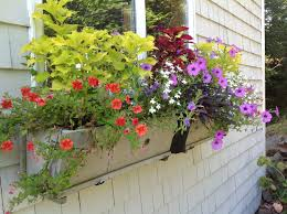 Plants For Patio by Colorful Annuals For Shade Part Two Carolyn U0027s Shade Gardens