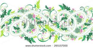scottish thistle stock images royalty free images vectors
