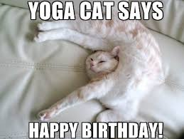 Cat Birthday Memes - funny cute angry cat memes collection for friends family
