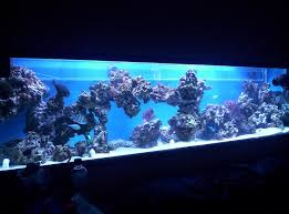 Reef Aquascape Designs Please Advise On Aquascaping Using Pvc Piping Marine Aquariums
