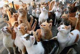 cat island japan s cat islands aren t the paradise they seem because they re