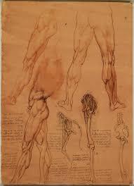 a rare glimpse of leonardo da vinci u0027s anatomical drawings u2013 brain