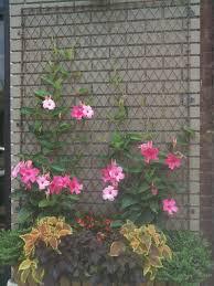 garden trellis ideas pictures country homes
