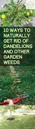 gardening tips 1881 best garden tips images on pinterest gardening garden