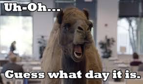 Happy Hump Day Memes - hump day camel amanda s new life