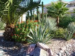 desert landscaping picks the plants ideas dzuls interiors