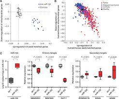 mhcc cus map microrna 122 as a regulator of mitochondrial metabolic gene