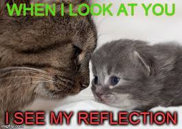 Cute Kitty Meme - 11 cute kitten memes will instantly brighten your day the cutest