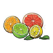 halves of orange grapefruit lime and lemon hand drawn sketch
