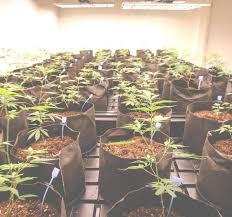 an oregon cannabis farm crumble shatter wax u0026 oil apollo grown