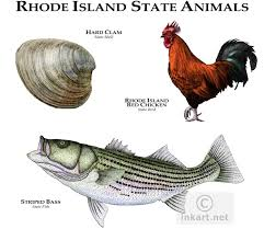 Rhode Island wild animals images Full color illustration of a state animals of rhode island jpg