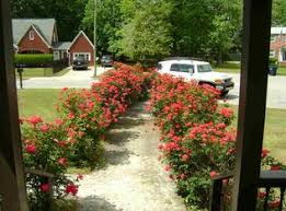 Landscaping Jacksonville Nc by 102 Keller Ct Jacksonville Nc 28540 Zillow