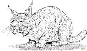 spanish lynx coloring page free printable coloring pages