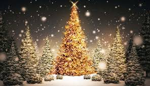 christmas tree best images hd pictures