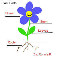 18 best plants images on pinterest plants plant life cycles and
