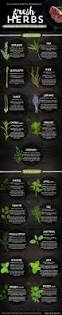 Cooking Infographic by A Beginner U0027s Guide To Cooking With Fresh Herbs Infographic