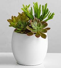 What Plants Are Cubicle Friendly by 14 Fun Decorating Ideas For Your Desk To Make Work More Fun