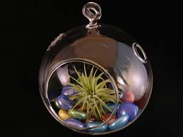 amazon com hinterland trading air plant bubble glass globe