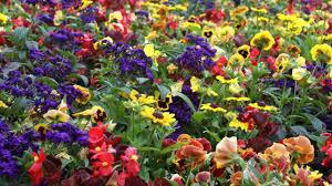 flower gardens مناظر طبيعة رائعة جدا most beautiful flower gardens in canada