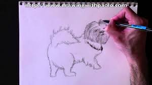 drawing a shih tzu with paolo morrone youtube