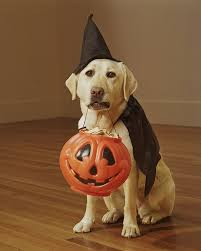 Pet Halloween Costumes Dogs 25 Cute Dog Costumes Ideas Puppy Costume