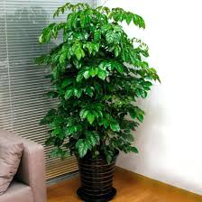 100 indoor small plants lawn u0026 garden indoor garden by
