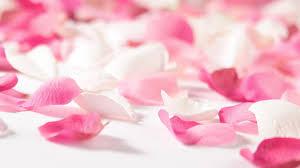 pink flowers wallpapers hd wallpaper wiki