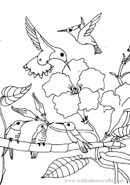 very detailed realistic hummingbird coloring page for adults free