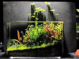 Aquascape Tank 169 Best Aquascaping Nano Aquariums Images On Pinterest