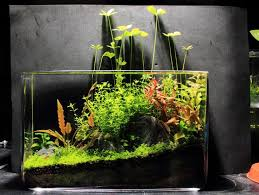 Nano Aquascaping 169 Best Aquascaping Nano Aquariums Images On Pinterest