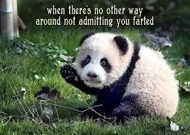 Funny Panda Memes - 33 funny pics memes full of crazy weird inspiration funny pics