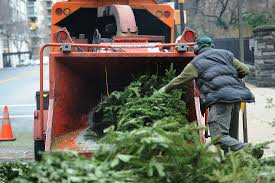 christmas tree recycling tips for pick up disposal people com