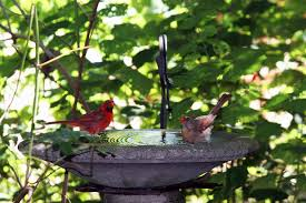 bird attracting native plants build a better birdbath