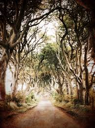 Ireland Vacation Ideas The Dark Hedges County Antrim Northern Ireland Aka The King U0027s