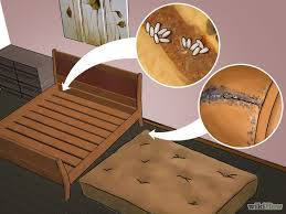 The Best Way To Kill Bed Bugs How To Get Rid Of Bed Bugs In The Mattress New York Blog Ny