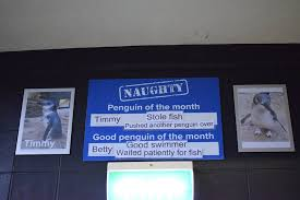 of the month this aquarium has a penguin of the month board travel