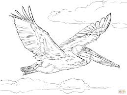 pelicans coloring pages free coloring pages