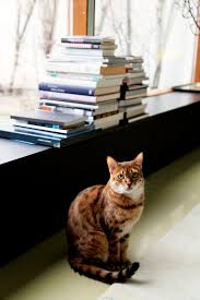 118 best cats u0026 books images on pinterest books kitty cats and cats