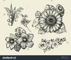 flowers hand drawn sketch flower sunflower stock vector 459502873