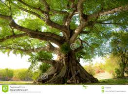 tree stock photos images u0026 pictures 3 761 307 images
