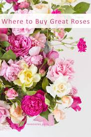 buy roses sources where to buy great roses notes