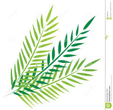palms for palm sunday palms in friday stock vector illustration of drawing 29883487