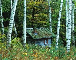 Vermont forest images Log cabin in the birch forest vermont photograph by joe palermo jpg