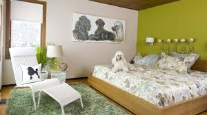dans une chambre une chambre qui a du chien les idées de ma maison