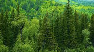tree landscape mac wallpaper background images green season