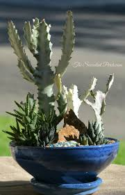Indoor Plants Arrangement Ideas by 557 Best Succulent Container Arrangements Images On Pinterest