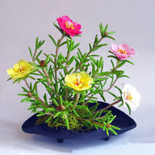 flower plants 400pcs indoor flower plants sun flower seeds cheap potted flower