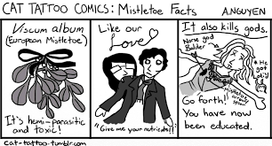 mistletoe facts the daily texan