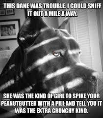 Great Dane Meme - noir dog know your meme