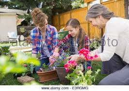 multi generation family planting flowers in garden stock photo